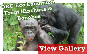 Bonobos Eco Excursion