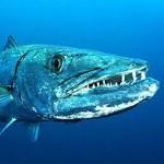 congo-ocean-fishing-tn