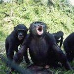 kin-sbb4-bonobos-tn
