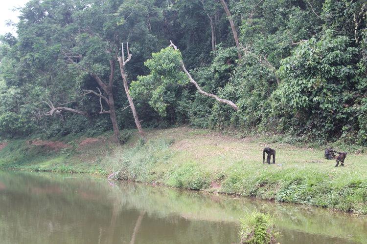 bonobos-eco-1