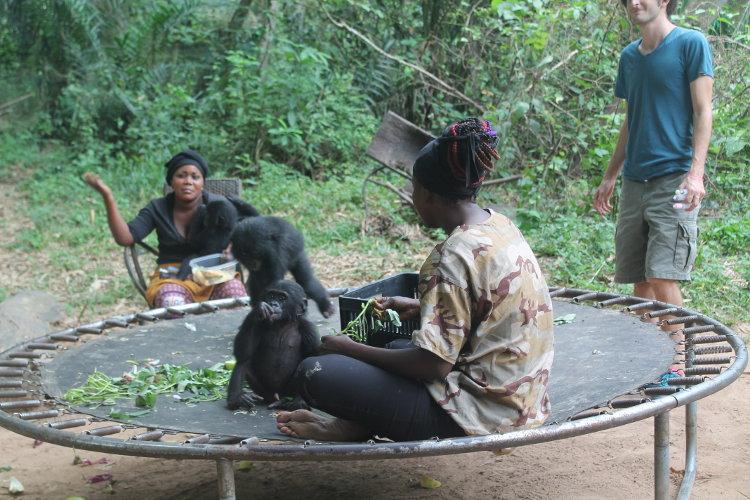 bonobos-eco-10