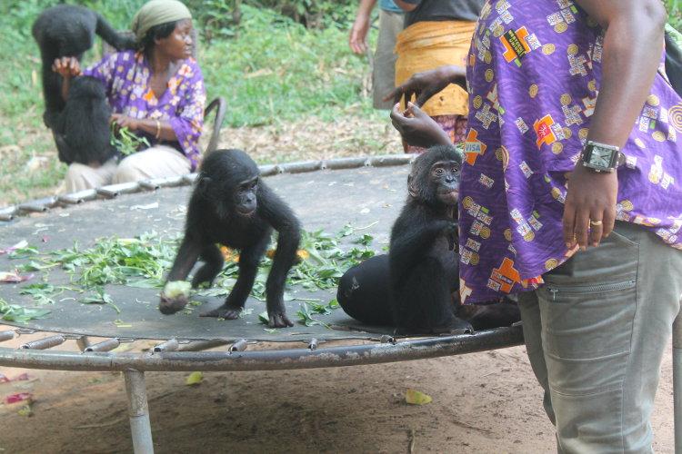 bonobos-eco-12