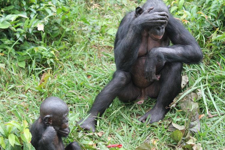bonobos-eco-5