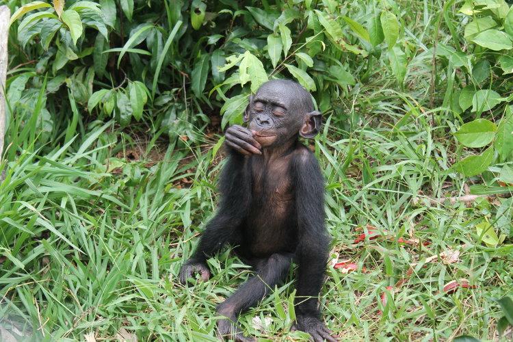 bonobos-eco-8